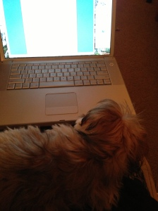 Laptop puppy